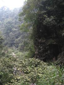 灌木旁的山崖
