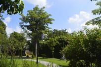 观赏树木蓝天白云