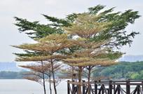 湖边的树木风景