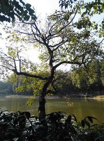 湖边的一棵树木风光
