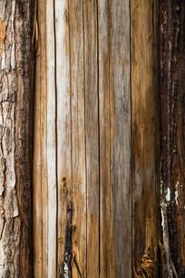 枯老的树木纹理素材
