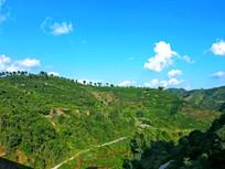 蓝天下的茶山与山间小道