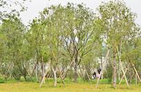 绿树树林风景
