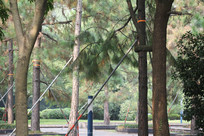 钱塘江旁针叶林