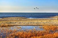 秋季的达里湖