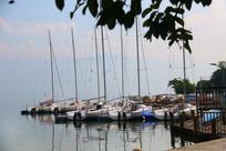 树叶远处的白帆船