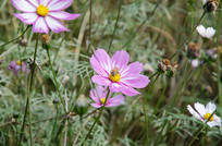 小蜜蜂采花蜜