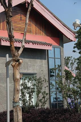 中式小楼前的灌木