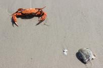 贝壳与螃蟹