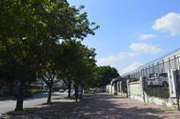 广州机动车检测站旁风景