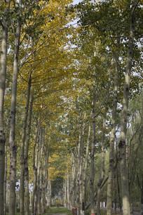 排列整齐的树木