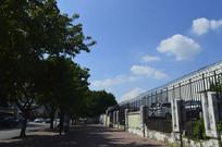人行道绿树蓝天白云