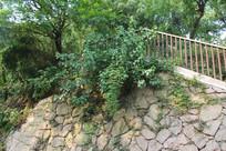 白塔公园旁石壁
