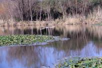 池塘里飞出的白鹭