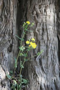 大树下的小野花