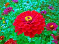 红色花卉特写摄影