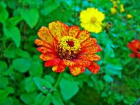 黄色红斑花卉特写摄影