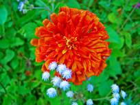 橘黄色花卉特写摄影