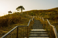 景观路松树凉亭