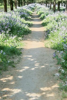 开满鲜花的泥巴小路