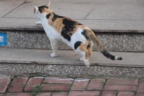 爬行的花猫