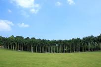 热带雨林草坪