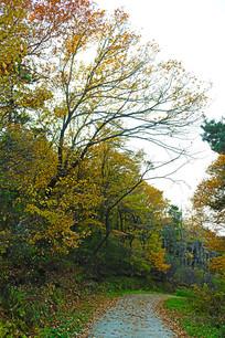 树木落叶小路