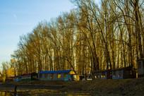 树木木屋落叶