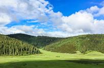 香格里拉普达措的草原