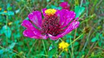 紫色花卉特写摄影
