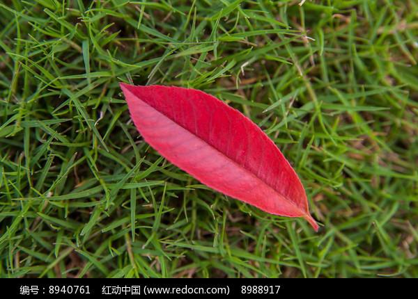 草地上的红色叶片背景素材图片