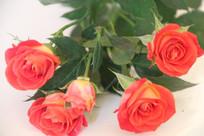 放在白桌上的五朵玫瑰