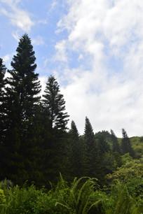 广州云台花园谊园树木景观