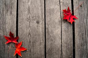 红色枫叶边框旧木板底图背景