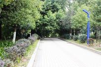 绿树成荫台阶