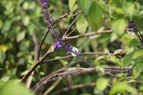 钱塘江边紫色花朵