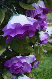 人造紫色月季花