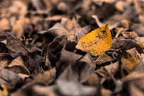 深秋黄色落叶壁纸图片素材