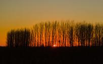 夕阳西下树木剪影