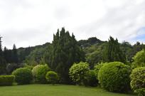 云台花园绿化观赏树木