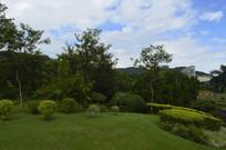 云台花园谊园草坪绿植