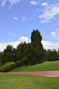 云台花园谊园行道树草坪道路