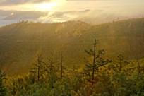 大兴安岭森林