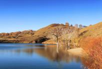 蛤蟆坝湖中枯树
