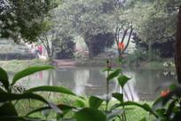 茅家埠水塘与岸边花朵
