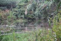 茅家埠水塘与水边草丛