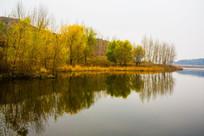 水库中树木倒影风景