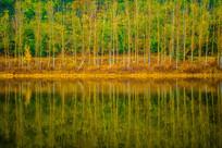 水面波纹树木倒影