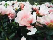 优雅粉色花朵