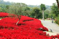 园林红色花园